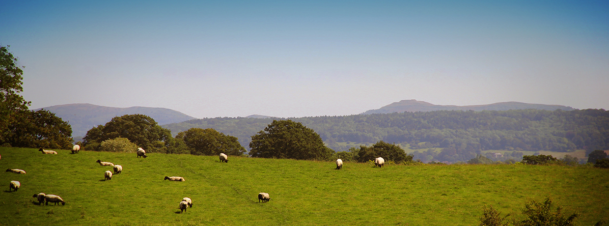 View of the Malvern hills with sheep